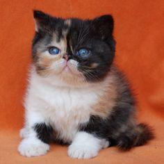 Blue-eyed baby Pudge