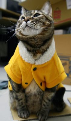 Juliet is proud of her new coat :)