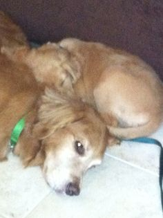 Cody snuggling with Jack