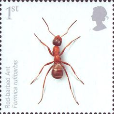 1st, Red Barbed Ant from Endangered Species - Insects (2008)