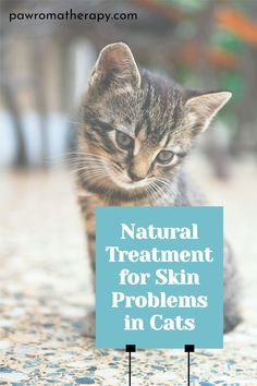 Healing Gel for Cats. All natural, organic skin care gel for cats. Created by holistic veterinarian, Dr. Deneen Fasano. Healing herbal skin gel for cats made with safe, all natural ingredients. #overgrooming#catskinproblems#itchycat#catabscess#skingelforcats Cat Skin Problems, Cat Allergies, Skin Gel, Flaky Skin, Neem Oil, Cute Animal Pictures, Aloe Vera Gel, Natural Treatments, Natural Healing