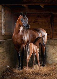 """scarlettjane22: """" Egypt Horse """""""