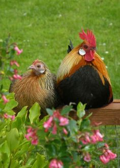 That was quite a pick up line George, but it worked. Now, where are those chicks?.............