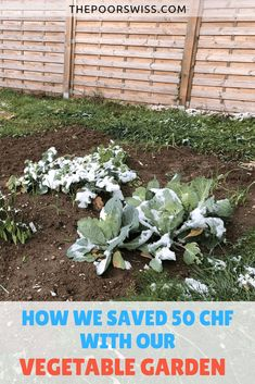 Find out how we saved 50 CHF with our vegetable garden. The harvested vegetables are worth 50 CHF more than what we paid for the seeds! Managing Money, Money Saving Tips, Living Within Your Means, Chf, Get Out Of Debt, Lots Of Money, Frugal Tips, Money Management, Frugal Living