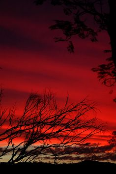 ♂ Red Brissy sunset  Silhouette