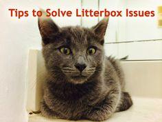 Cat Pees Outside Litter Box Tips