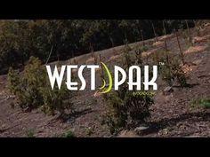 Ready, set, grow! Tour West Pack #Avocados 115,000 sq. ft. Murrieta, CA facility