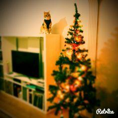 #christmastree #cat #tree #noelcat