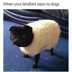 Morning Animal Memes of the Day - 4