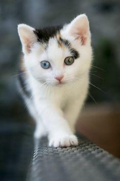 Cute Cat Mobile Wallpaper - Mobiles Wall