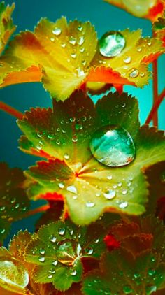 New nature photography leaves dew drops Ideas Beautiful Flowers Wallpapers, Beautiful Nature Wallpaper, Colorful Wallpaper, Flower Wallpaper, Wallpaper Backgrounds, Aztec Wallpaper, Glitter Wallpaper, Iphone Backgrounds, Pink Wallpaper
