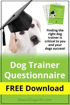 Finding the right dog trainer is critical to you and your dogs success! Don't make the mistake of not asking the right questions... do you know what to ask?  via @KaufmannsPuppy
