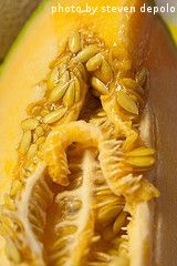 Want to know about saving cantaloupe seeds to re-plant next year? Cantaloupe seeds can be saved and. Honeydew, Cantaloupe, Growing Melons, Backyard Vegetable Gardens, Cooking Tips, Watermelon, Bacon, Roast, Seeds