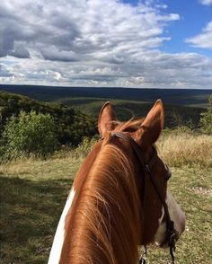 Between the ears of a chestnut pinto horse overlooking a view of green hills