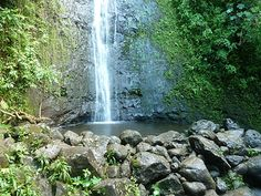 Here are the things you should know before hiking Manoa Falls Trail. Learn more about the trail and how to get there.