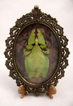 Feuille d'insecte: Encadré spécimen curiosités bizarrerie gothique victorien Steampunk Vintage Antique Macabre Unique Bohème Boho Chic Hippie Gipsy