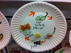 Life cycle with pasta:) SO CUTE!