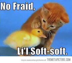 Kitten and baby duck. Adorable.