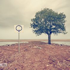 The last tree on Earth - Pinned by Mak Khalaf Once upon a time...in the future? Fine Art arbreartdesertearthecologieecologyenvironmentgreennaturephotographyplaneteplantpollutionroadsarah louettesignterretree by SarahLouette