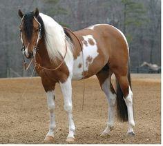 De The Cowgirl Way...Hermoso caballo