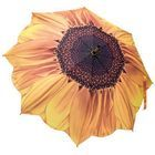 Stockschirm Sonnenblumen