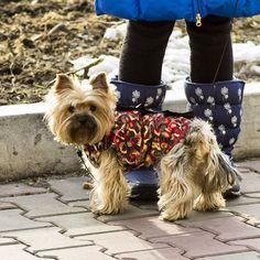 Spring is coming Asuka the #Yorkie #yorkeezz #yorkshireterrier #yorkielife #yorkiediaries #instayorkie #pets #dogs #yorkiesarethebest