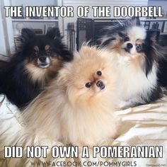 The inventor of the doorbell did not own a Pomeranian!  by pommygirls