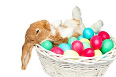 "Parents everywhere are preparing to be ""Bunny's Helper"", but it's hard to figure out what to put in your baby or toddler Easter baskets."