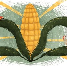 It's Time to Rethink America's Corn System