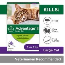 Flea Prevention For Cats Over 9 Lbs 6 Pack Advantage Ii Warehouse Direct Flea Prevention For Cats Cat Fleas Fleas