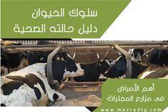 سلوك الحيوان دليل على حالته الصحية - mazra3ty | مزرعتي