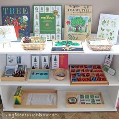 How to Prepare Montessori Shelves for a Year Old - Montessori , How to Prepare Montessori Shelves for a Year Old Montessori Tree-Themed Shelves Cosas de niños. Playroom Montessori, Kindergarten Montessori, Montessori Trays, Montessori Homeschool, Montessori Toddler, Montessori Materials, Montessori Activities, Preschool Classroom, Preschool At Home