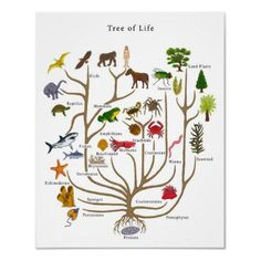 Tree of Life  by bobby77lee