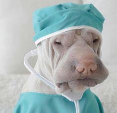 Dr. Pei