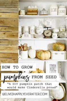 How To Grow Heirloom Fairytale Pumpkins From Seed (DIY Pumpkin Patch!) How To Hand Pollinate A Pumpkin Plant, How To Harvest, Care For And Clean Pumpkins To Make Them Last | We Lived Happily Ever After Pumpkin Squash, Diy Pumpkin, Pumpkin Garden, Squash Flowers, Planting Pumpkins, Drinking Tea, Harvest, Seeds, Patches