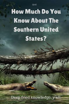 The Southern United States is filled with bayous, forests and a cultural mystique unlike any other place in the world. But what do you really know about life in the Spanish moss and swamps? Take our Southern America quiz and find out!