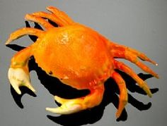 Show product details for Crab - Dungeness - Small