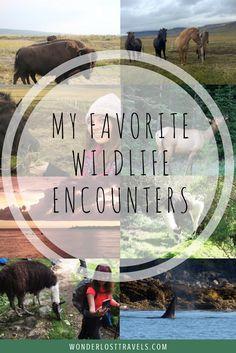 My Favorite Wildlife Encounters - Wonderlost Travel Blog