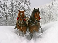animals in winter | ... winter snow trees animals horses 2048x1536 wallpaper Animals Horses HD
