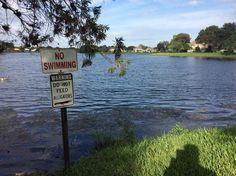 #tembustravels älä syötä alligaattoria