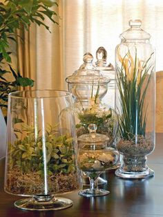 Vintage French Soul ~ Succulents,+moss+and+glass+candy+containers+were+used+to+make+this+terrarium+centerpiece. Terrarium Centerpiece, Centerpiece Decorations, Decoration Table, Mini Terrarium, Decorating End Tables, Kitchen Island Centerpiece, Terrarium Wedding, Decorating Ideas, Garden Terrarium