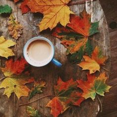 Tasty Cup of Joe, Surrounded by Beautiful Fall Colored Leaves. Coffee Photography, Autumn Photography, Autumn Tumblr, Autumn Cozy, Autumn Coffee, Autumn Tea, Autumn Fall, Autumn Aesthetic, All Nature