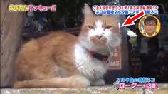 トコトン掘り下げ隊!生き物にサンキュー!!猫ちゃん可愛いです #1! 2017年8月15日