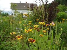Our summerhouse garden. Mixed border with rudbechias. Møll July 22nd 2012