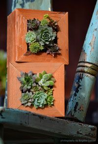 Vertical Garden Boxes- loving succulents right now