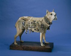 Stubby was the first dog to be given rank in the U.S. Armed Forces. By the end of World War I, he had served in 17 battles.