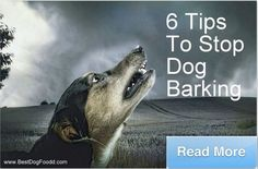 "6 tips to stop dog barking (for ""no"" reason) www.bestdogfoodd...."