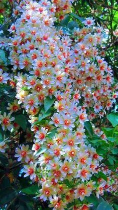 Flowers Quotes About Everything - - Blumen im Cottage Garten und Bauerngarten - Beautiful flower quotes about life -