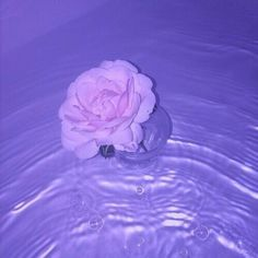 Images of pastel purple aesthetic - Violet Aesthetic, Dark Purple Aesthetic, Lavender Aesthetic, Rainbow Aesthetic, Aesthetic Colors, Aesthetic Grunge, Aesthetic Pictures, Water Aesthetic, Flower Aesthetic