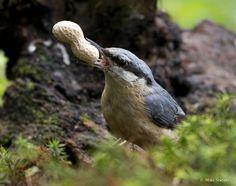 Gepind vanaf vroegevogels.vara.nl - Boomklever